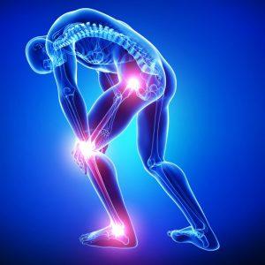 Sports Traumatology